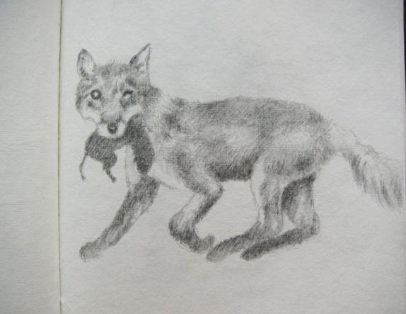 Dyr i naturen her hjemme - Norge - Disse bildene er fra en skissebok. (Jeg kan lage maken på bestilling.) Bildene her er i A5 format og de er tegnet med 3B blyant. Men jeg tegner gjerne i A4 til samme pris. Jeg bruker syrefritt papir som ikke blir gult. Det er ikke lenge siden vi  - Norge