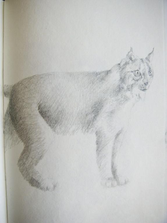 Bilder av ville dyr