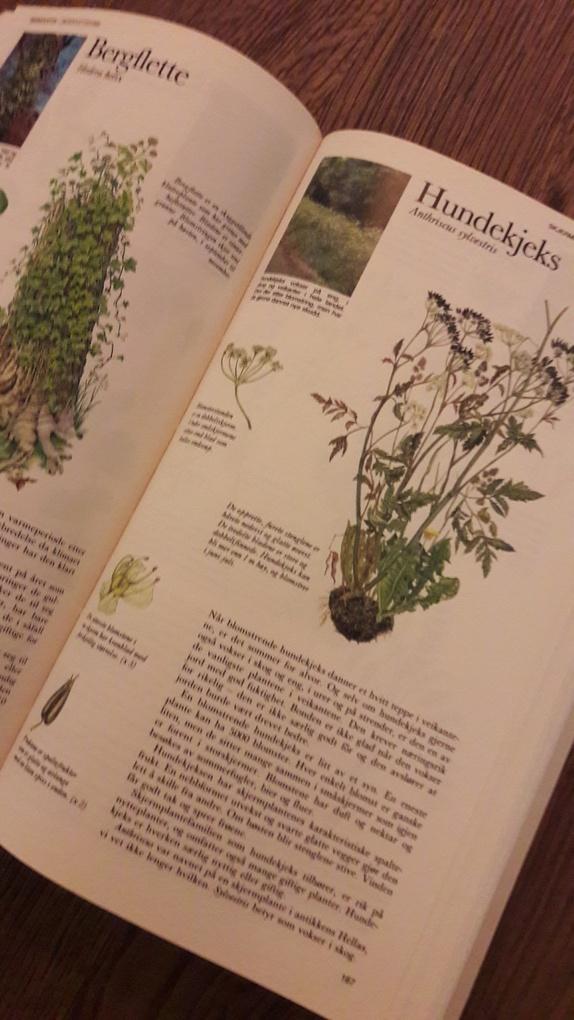 Ville planter i Norge - Norge - Pent innbundet bok om ville planter i Norge.Fint illustrert. Mang gode råd å ta med seg. Boken er lite slitt. Søkeord:regnbuen design,planter,bok,natur,blomster,sommer - Norge