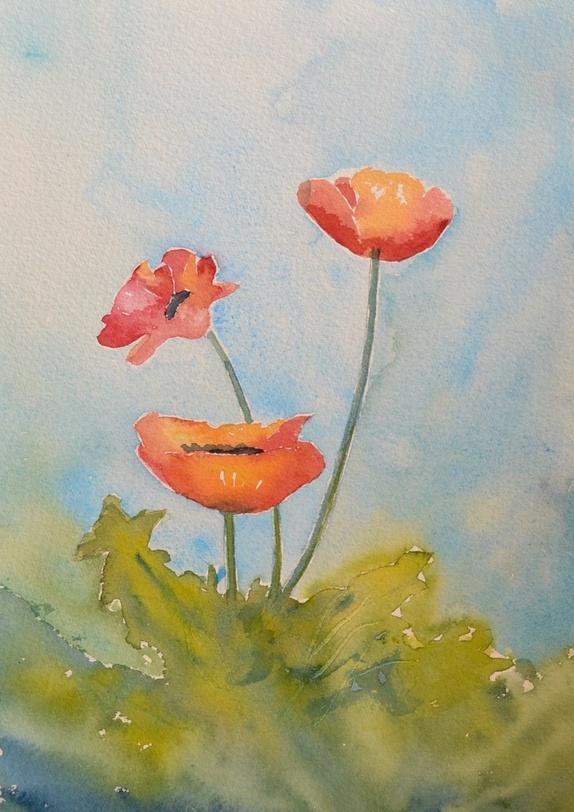 Akvarell - valmuer - Norge - Akvarell malt i kunstnerfarger på min.300 g papir. Størrelse: 26 x 18 cmSelges uten passepartout og ramme. vårgrønn vårfarger vårblomst blomstrødt gult - Norge
