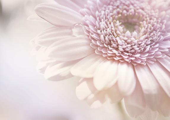 Rosa blomst - 10x15cm print - Norge - Bilde av rosa pastell blomst nr 2. Format: 10x15cm, printes hjemme på Canon fotoprinter med Canon printer blekk og Canon fotopapir i høy kvalitet. Selges uten ramme og signert på bakside. Bildet sendes i stiv pappkonvolutt. Vær oppmerksom på  - Norge