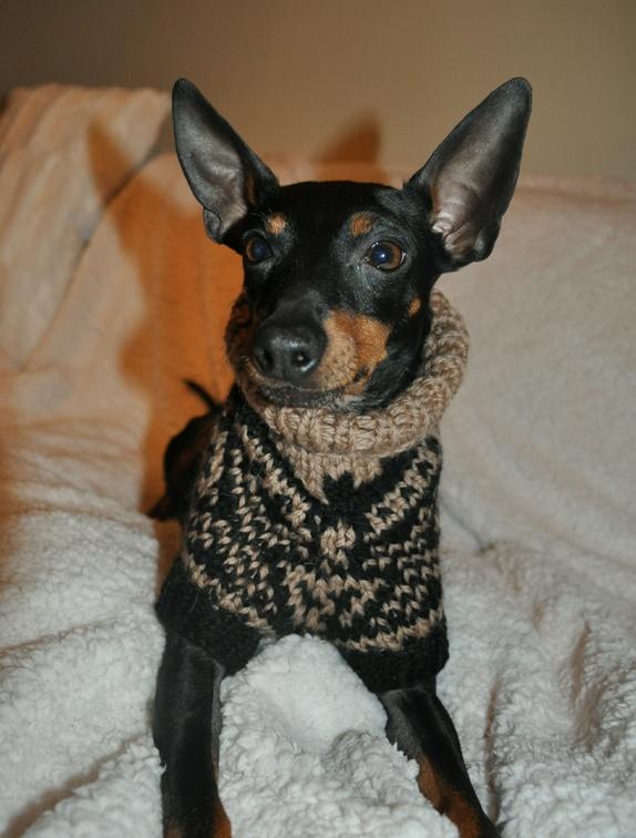 Marius(C)(R) genser til hund. Str M | Hundeklær, Hund, Strikking